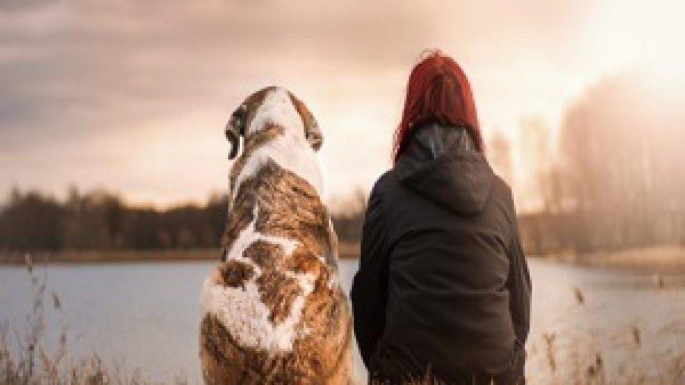 chien ami